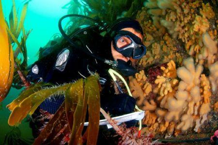 DivingROVmainpage-03.jpg
